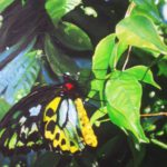 Jo Morris Paintings Butterfly Hope