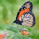 Jo Morris Paintings Butterfly 5