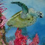 Jo Morris Paintings Turtle 1