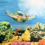 Jo Morris Paintings Turtle