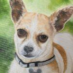 Pet Portrait Milo Jo Morris Paintings